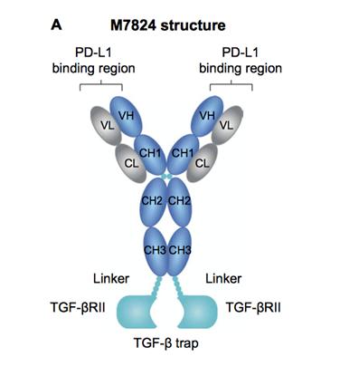 """""""升级版""""PD-1抑制剂来临:这个划时代免疫药物到底有多强"""